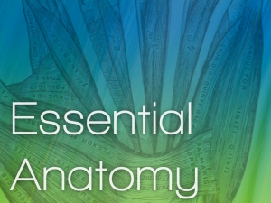 エッセンシャル解剖学